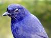 vogel01-k-n.jpg