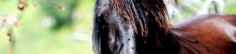 pferd-02